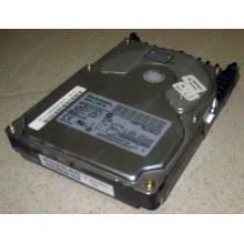 Жесткий диск 18.4Gb Quantum Atlas 10K III U160 SCSI 80 pin (Керчь)