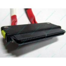 SATA-кабель для корзины HDD HP 451782-001 459190-001 для HP ML310 G5 (Керчь)